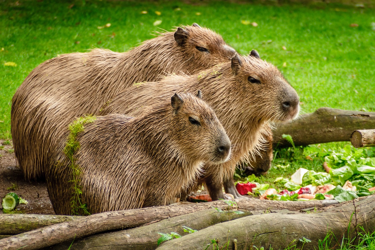 A Happy RSpec, Capybara and DatabaseCleaner Setup